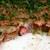 おからコロッケ?行田のゼリーフライと謎の焼き物フライ。