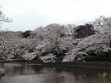北鎌倉の大衆中華屋「大陸」でタンメン。気になってた。