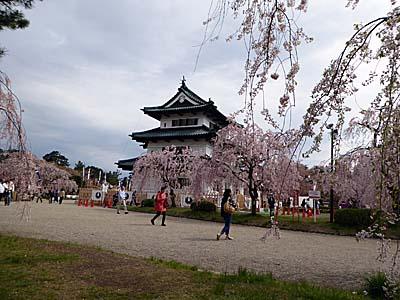 さくらまつりの時期の弘前城